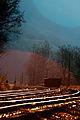 Morning Mist (4181686730).jpg