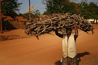 Firewood - Firewood collector in Mozambique