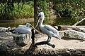 Muenster-100720-15828-Zoo.jpg