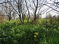 Mykhailykivskyi Hydrological Reserve (05.05.19) 04.jpg