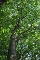 Mykulyntsi-buky-n4-15056875.jpg