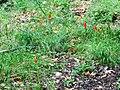 Myli-Schlucht Rethymno 23.jpg