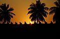 N-TN-C192 Nandi statues on inner compound Wall at Sunrise.jpg