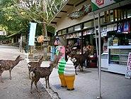 Nara deer beg for handouts outside a shop on Sanjo Street