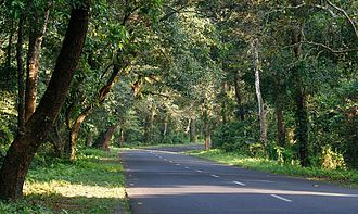 Dooars - National Highway 31 near Lataguri, West Bengal.