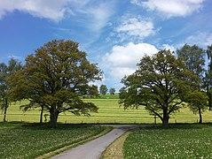 Naturdenkmal Eichen Schmallenberg-Grafschaft, Wiesenweg.jpg