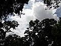 Nature20180824 122504.jpg