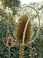 Nature - Natura (15185233127).jpg