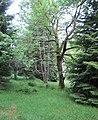 Nature reserve Prameniště (13).jpg
