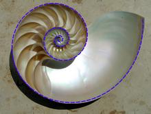 Logarithmic spiral - Wikipedia