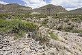 Near Beeman Canyon - Flickr - aspidoscelis (1).jpg
