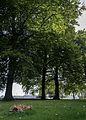 Noordlaren - kerkhof - reuzenzwam met beuken.jpg
