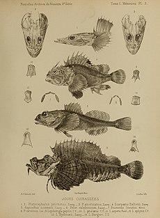 Nouvelles archives du Muséum d'histoire naturelle (Pl. 2) (7183150941).jpg
