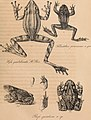 Nova acta physico-medica (1835) (14596007559).jpg