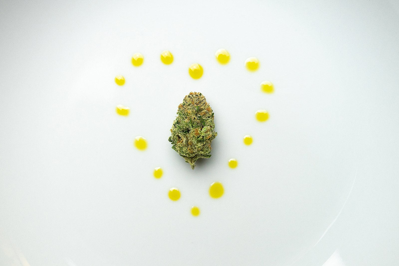 CBD nug surrounded by heart-shaped drops of CBD oil