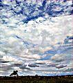 Nuvens - panoramio (1).jpg