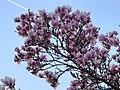 Oerlikon - Regensbergstrasse 2012-03-28 19-28-50 (P7000).JPG