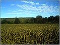 Oktober in Gottenheim - panoramio (3).jpg