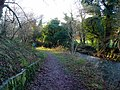 On the Clyde Walkway by the Garrion Burn - geograph.org.uk - 1622783.jpg