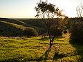Onkapringa River NP landscape P1000610.jpg