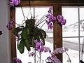 Orchidaceae.80270.JPG