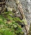 Otter - geograph.org.uk - 157023.jpg