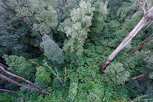 Great Otway National Park - Great Otway National Park