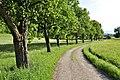 Pörtschach Winklern Am Kåte Gaisrückenfahrweg Birnbaumallee 14052012 1835.jpg