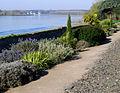 P1320082 49Ste Gemmes sur Loire jardin méditerranéen rwk.jpg