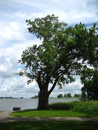 Pointe-aux-Trembles - Pointe-aux-Trembles overlooking the river.