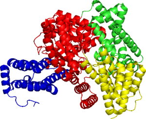 Phosphoenolpyruvate carboxylase - Figure 1: the Phosphoenolpyruvate (PEP) carboxylase single subunit structure (generated by PyMOL)