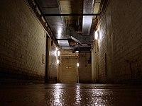 Paddock corridor.jpg