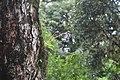Paithalmala trek during monsoon - photos (174).jpg