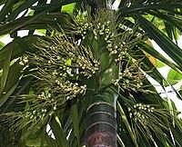 Palm I IMG 2108