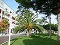 Palmier sur le front de mer - panoramio.jpg