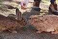 """Parcul de Animale - """"Moara de Vant"""" (8110165045).jpg"""