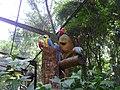 Parque das aves - Foz do Iguaçu-PR - panoramio.jpg