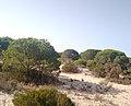 Parque de Doñana 20210610 15.jpg