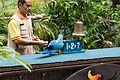 Parrot does math (25051901354).jpg