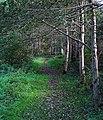 Path, Minnowburn - geograph.org.uk - 1008399.jpg