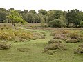 Path across White Moor, New Forest - geograph.org.uk - 57391.jpg