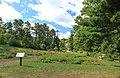 Peony Garden Nichols Arboretum University of Michigan Ann Arbor.JPG