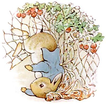 PeterRabbit13.jpg