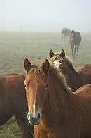 Horses02.JPG