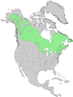 Picea mariana USGS range map.png