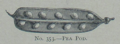 Picture Natural History - No 353 - Pea Pod.png