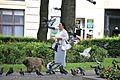 Pigeon Attack (6002104192).jpg