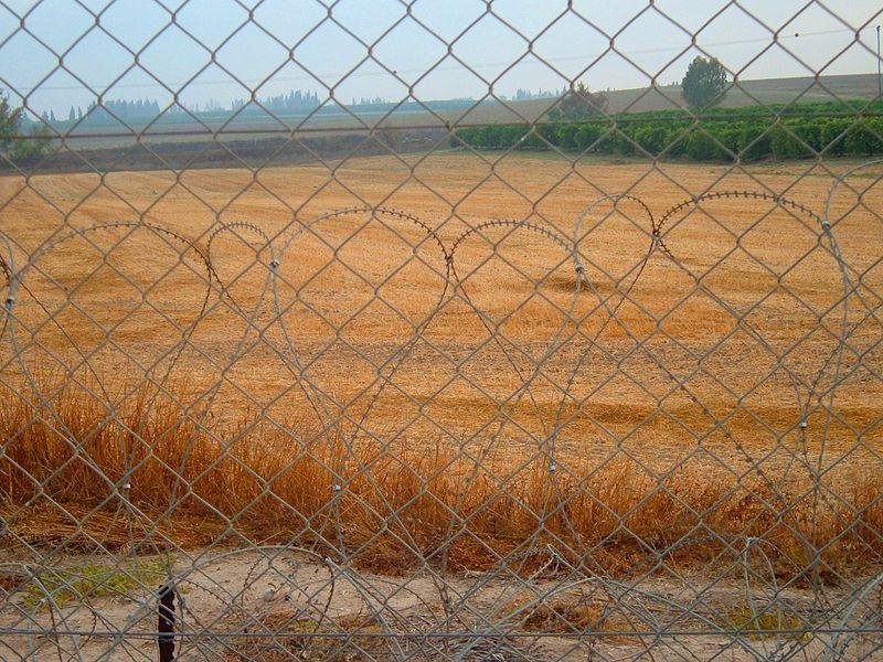 שדה ליד גדר המערכת בקבוץ מפלסים