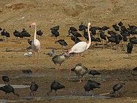 PikiWiki Israel 53083 wildlife animals.jpg