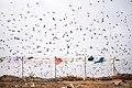 PikiWiki Israel 53729 environment of israel.jpg